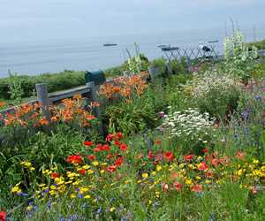 Celia Thaxter's garden on Appledore