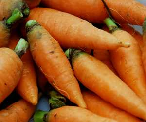 Meadow's Mirth carrots